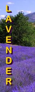 Ormus Minerals Lavender in Calming Magnesium Oil
