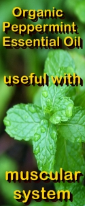 Ormus Minerals Organic Peppermint Essential Oil useful with muscular system
